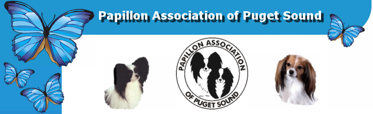 Papillon Association of Puget Sound
